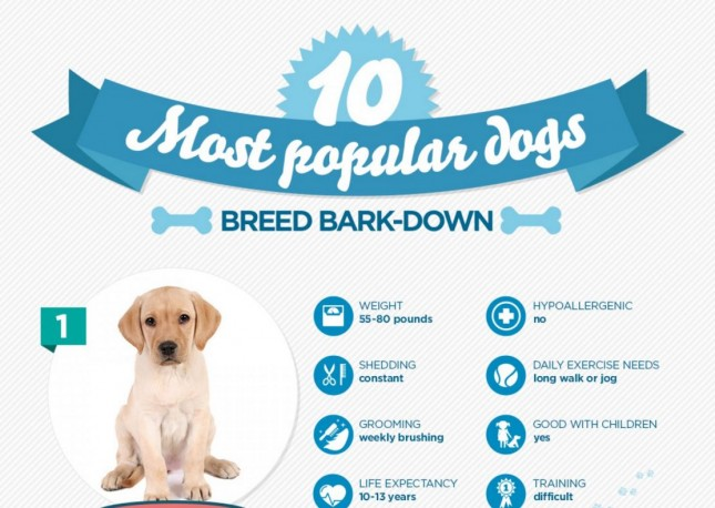 10_Nationwide_10 Most Popular Dogs