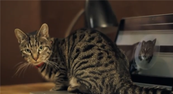 Purina video by Buzzfeed.